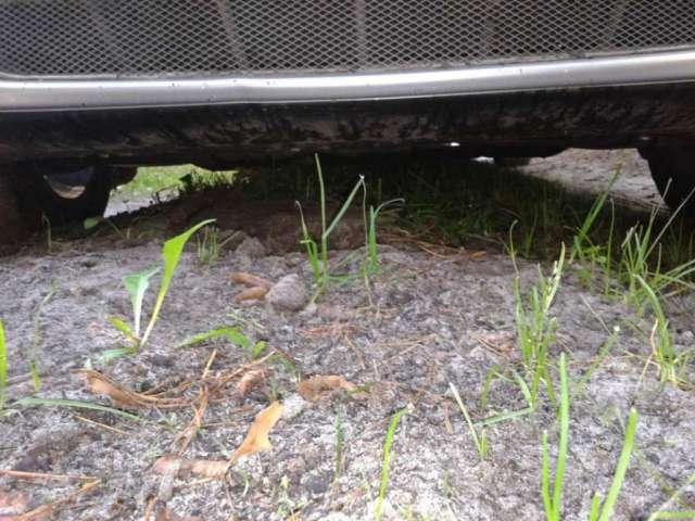 На охоте за грибами - дорожный просвет