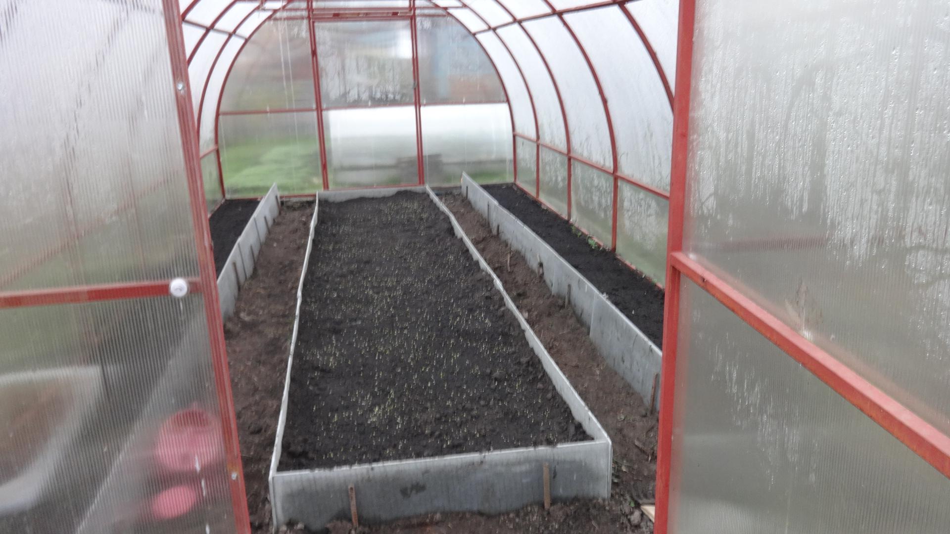 Что посадить в теплице осенью : овощи, ягоды, зелень, когда и как сажать